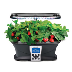 Grow garden plants indoors with Aero Garden