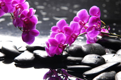 beautiful orchid flowers with zen therapy stones