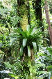 Jungle Bromeliad Growing on Tree