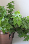 Healthy House Plants Care