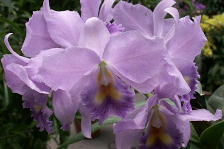 Plant Care Orchids - House Plants & Flowers