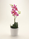 Beautiful Orchid in White Pot