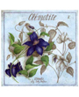 Flower Plant Poster Clematis, Clematite Vincent Jeannerot
