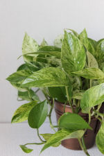 Indoor House Plants Pictures and Names